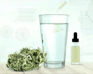 webcast Cannabis Tech-3